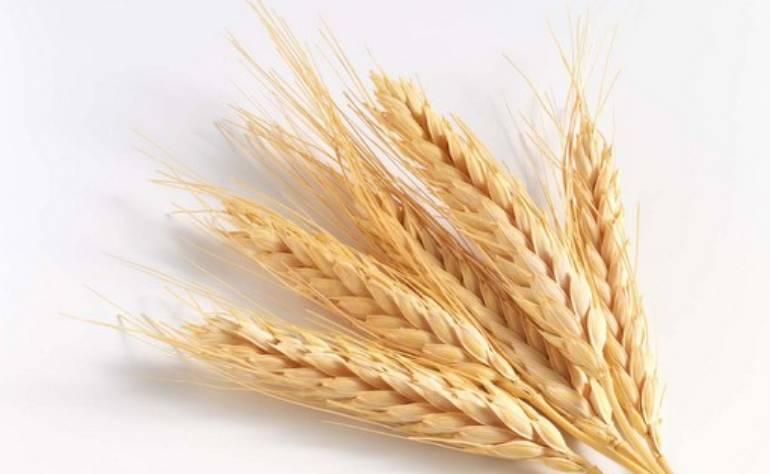 Cereali integrali – Ecco i vantaggi